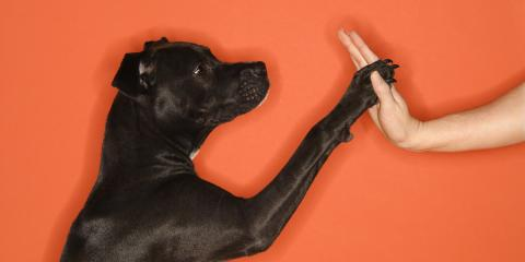 5 Dog Training Tips From Cincinnati's Pet Wellness Experts, Springfield, Ohio