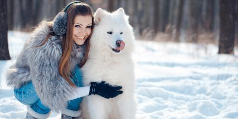 5 Pet Care Safety Tips During the Chill of Winter, Milford, Ohio