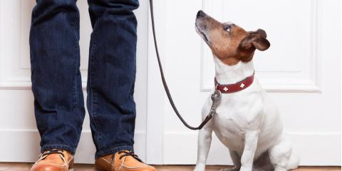 Pet Adoption 101: What to Know About Bringing a New Friend Home  , Clarksville, Maryland