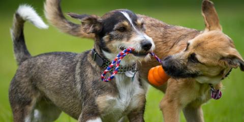 4 Reasons Your Dog Might Stink, Lincoln, Nebraska