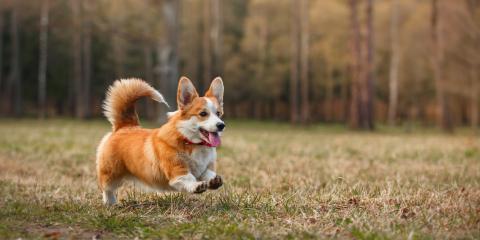 5 Essential Pet Boarding Preparation Tips, Columbia, Missouri