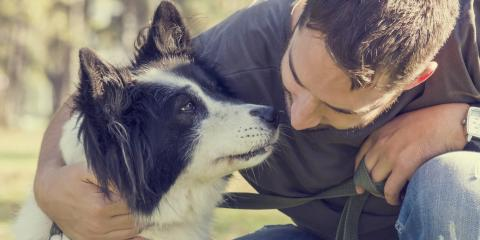5 Tips for Alleviating Separation Anxiety in Dogs Prior to Pet Boarding, ,