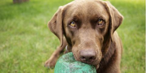 4 FAQ About Pet Boarding , Covington, Kentucky
