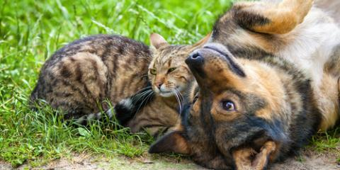 Top Veterinarian Debunks 4 Common Pet Care Myths, Elyria, Ohio