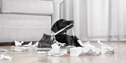 5 Practical Pet Care Strategies for Calming Puppies, Russellville, Arkansas
