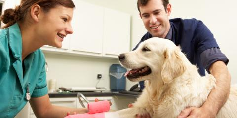 3 Benefits of Laser Surgery for Your Pet, Enterprise, Alabama