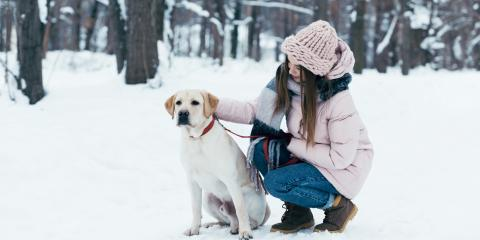 5 Wintertime Pet Care Tips, Miami, Ohio