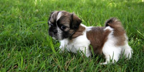 A Guide to Pet Care: House Training Puppies, Jefferson, Ohio