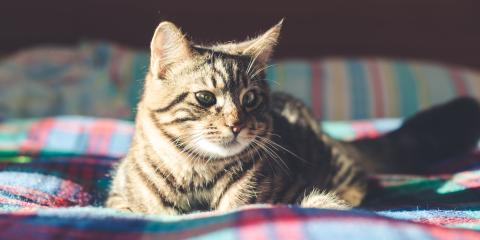 5 Tips for Taking Care of an Older Cat, Hilton, New York