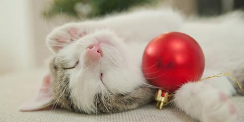 Holiday Pet Care Safety Tips, Bolivar, Missouri