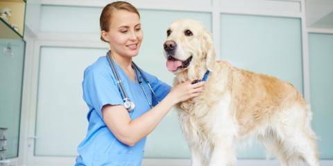 5 Pet Care Myths You Shouldn't Believe About Heartworm, High Point, North Carolina