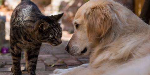 Can Dogs and Cats Be Friends?, Russellville, Arkansas