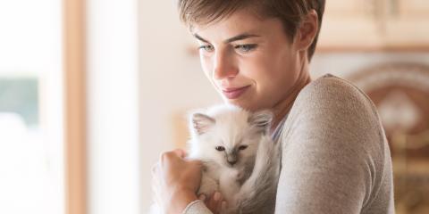 A New Owner's Guide to Kitten Care, Lincoln, Nebraska