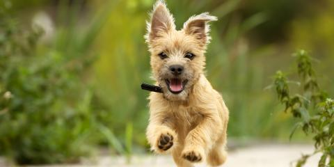 3 Tips to Help You Relieve Stress in Your Dog, Springfield, Ohio