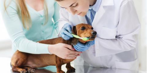 How Often Your Dog or Cat Should Visit a Pet Dentist for a Teeth Cleaning, Amsterdam, Virginia