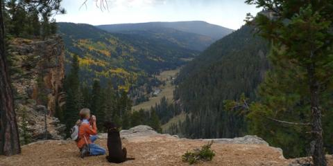 Looking For Pet Friendly Accommodations In Colorado 5 Reasons To