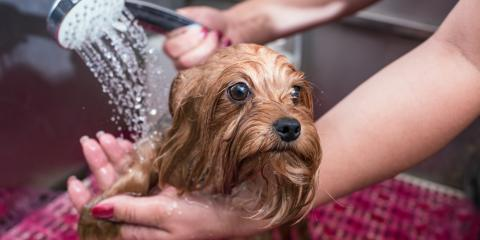 Can Regular Pet Grooming Help With Shedding?, Sanford, North Carolina