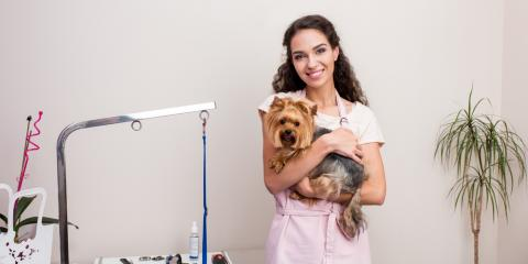 Your Guide to the Basics of Pet Grooming, Nicholasville, Kentucky