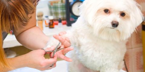 The Importance of Pet Grooming, High Point, North Carolina