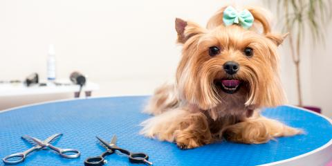 3 Pet Grooming Services Your Dog May Need , Elizabethtown, Kentucky