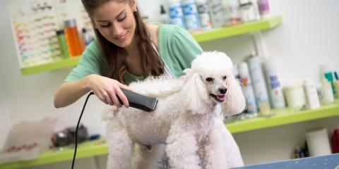 4 Dog Breeds That Require the Most Grooming, Fairbanks North Star, Alaska