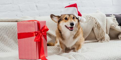 The Do's & Don'ts of Holiday Decorating With Pets, Ewa, Hawaii