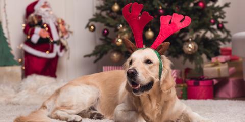 5 Holiday Pet Health Hazards to Watch For, Wentzville, Missouri