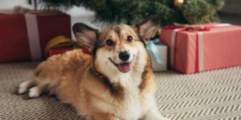 The Do's & Don'ts for Pet & Christmas Tree Safety, Wahiawa, Hawaii