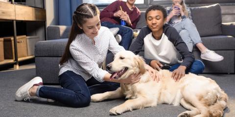 3 HVAC Tips for Pet Owners, Foley, Alabama