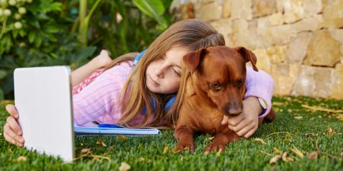 A Guide to Honoring Your Pet's Memory After Their Passing, Richfield, Ohio