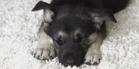 3 Reasons to Let Professionals Handle Pet Odor Removal, La Crosse, Wisconsin