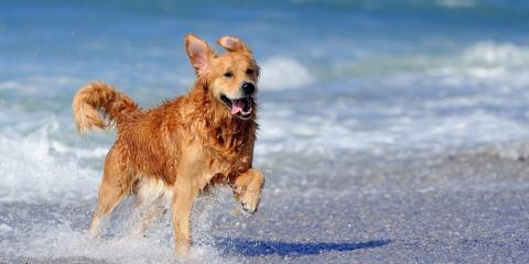 Everything You Need to Know About Pet Quarantine in Hawaii, Keaau, Hawaii