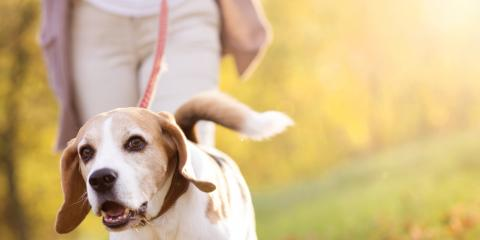How to Put Your Dog at Ease for Pet Sitting, Manhattan, New York