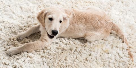 3 Reasons to Call a Professional for Pet Stain Removal, ,
