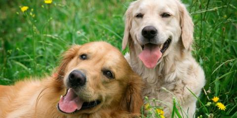 A Quick Guide to Canine Influenza & How to Prevent It, Versailles, Kentucky