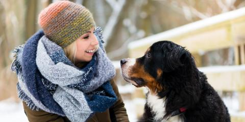 7 New Year's Resolutions for Pet Owners, Shelby, Wisconsin