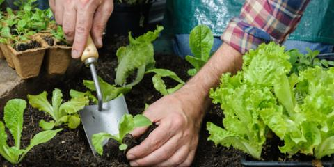Orthopedic Doctor Offers 3 Tips for Gardening With Arthritis, Hilo, Hawaii