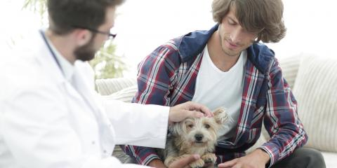 How to Reduce Pet Anxiety During Vet Visits, Buckeye Lake, Ohio