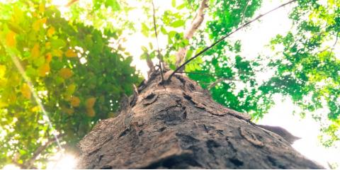 5 Reasons You Should Never Attempt a DIY Tree Removal, Hamilton, Ohio
