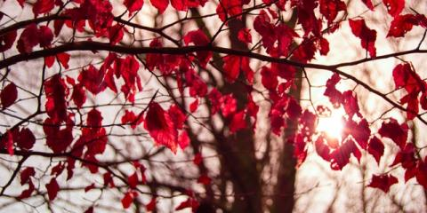 3 Types of Trees That Add Beauty to Your Property , Loveland, Ohio