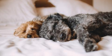 Find a Pet-Friendly Hotel During the Little League World Series, New Columbia, Pennsylvania