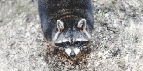 Protect Your Home With These 5 Wildlife Control Tips , Brewster, New York