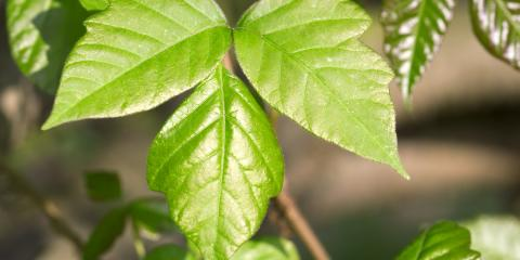 Exposed to Poison Ivy? Here's What You Should Do, East Cocalico, Pennsylvania