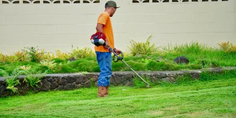 VIP Lawn Service, Lawn Care Services, Services, Honolulu, Hawaii