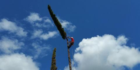 How to Prepare Your Home for Tree Trimming Services, Honolulu, Hawaii