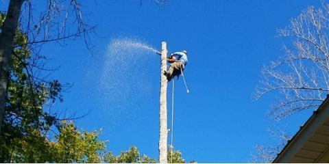 H & H Tree Service, Tree Service, Services, New London, North Carolina