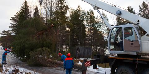 3 Things to Ask a Tree Service Company Before Hiring Them , Brewster, New York
