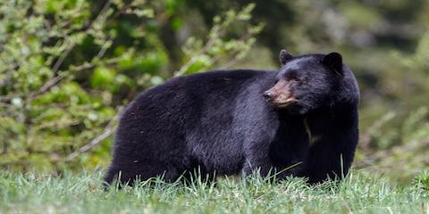 3 Types of Wildlife You Can See on Your Trip to the Smoky Mountains, Gatlinburg, Tennessee