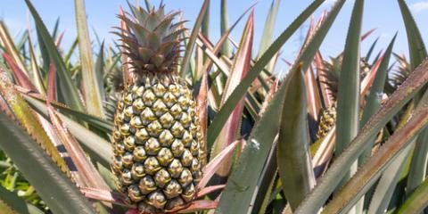 Sweeten Mealtime With Pineapple Recipes From Dole of Hawaii, Honolulu, Hawaii