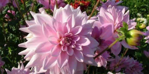 Honor Breast Cancer Survivors With Floral Arrangements, Lakeville, Connecticut